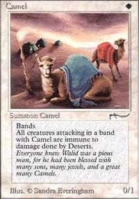 Camel Magic Card